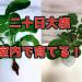 【水耕栽培】二十日大根を育てる室内スポンジ編