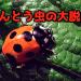 てんとう虫の大脱走【ケミクライム小説】